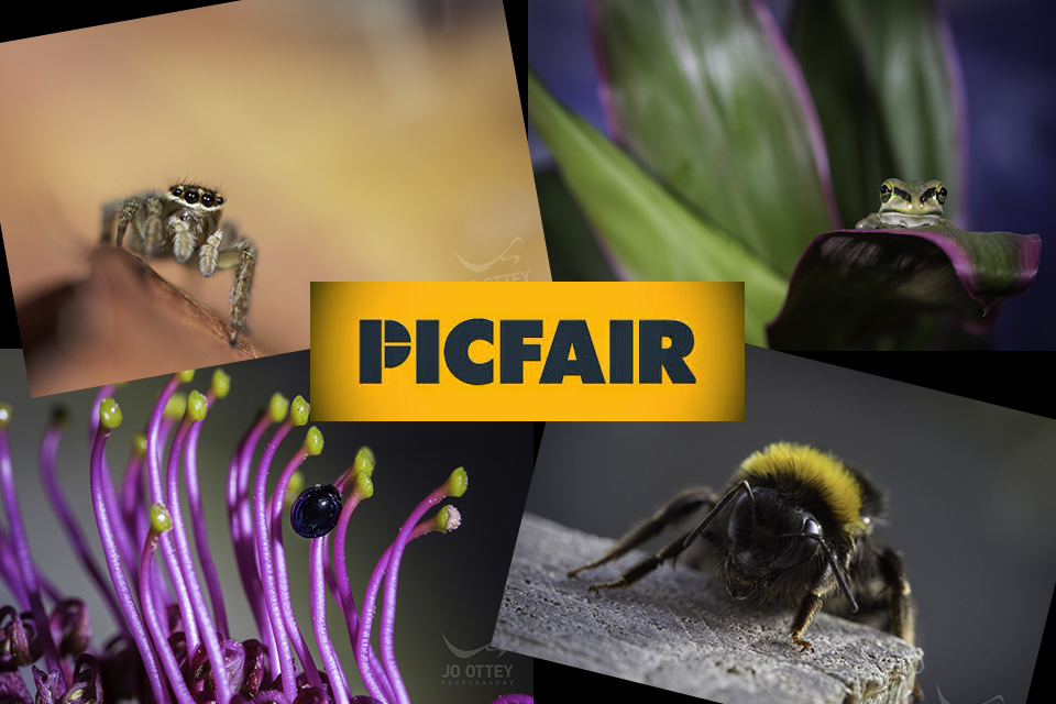 Picfair – Photographer Focus